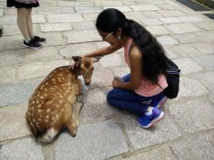 At the deer park in Nara